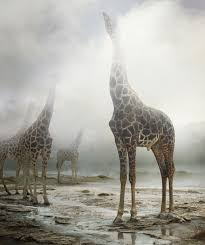 """Untitled #172, 2013"" by Simen Johan in the series ""Until the Kingdom Comes"""